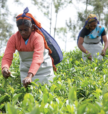 tea export in india